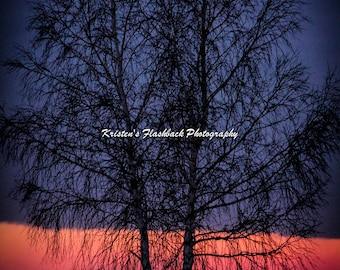 Grand Haven Michigan Beach Sunset with Tree