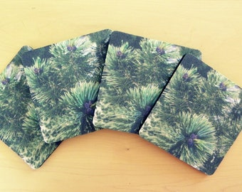 GREEN PINE Coaster Set created by Pam Ponsart for Pam's Fab Photos; it's just 'the ticket' for a Special Person on your shopping list