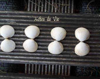 SMALL tree of life BEIGE sea Shell Shell