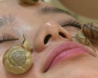 oil (slime) cochlea cosmetic oil 30 ml. Morocco