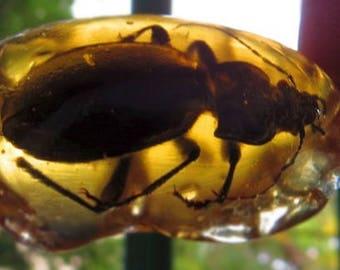 beetle epoxy, ground beetle, amber