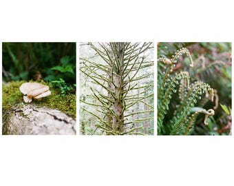 Woodland Forest Prints - Set of 3 - Oregon Prints, Gallery Wall Art, Fine Art Prints, Landscape Photography, Nature Photography