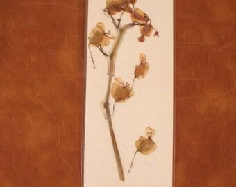 Pale pink begonia pressed flower bookmark