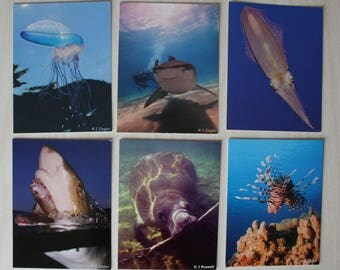 "OCEAN POSTCARDS - six different 6"" x 4"" images - FREE Shipping Worldwide"