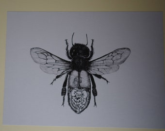Fly digestion drawing