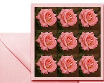 Pack of 4 Greeting Card Pink Roses nature photography pink rose 5 x5 inch in size, blank inside