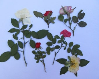 pressed flowers miniature rose stem dried rose buds assorted colors wedding card resin art pressed flower art craft bulk