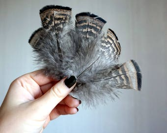 Turkey Feathers, 5 Pieces , 5+ quality