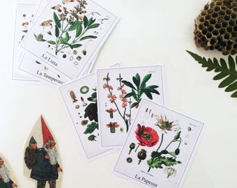 Botanical Gardens-Botanical Tarot Tarot-Tarot deck botanists including the major arcana