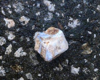Petrified Wood (#2) – EXACT crystal shown (1) Reiki Charged