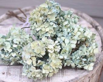 Dried Hydrangea macrophylla Stems (Group LY)- Dried Hydrangeas, Hydrangea macrophylla, Craft Hydrangeas, Wedding Hydrangeas