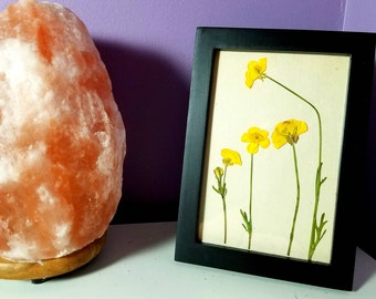 Framed Yellow Pressed Flowers