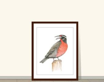 Militaris Bird Print, Watercolor Painting, Animal Wall Art, Watercolor Illustration, Wall Art, Wall Decor, Bird Art, Art Print, Wildlife