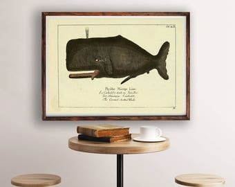Vintage Whale Art, Whale Print, Whale Illustration, Whale Poster, Ocean Art, Nautical Wall Art, Coastal Wall Art, Vintage Zoological Print