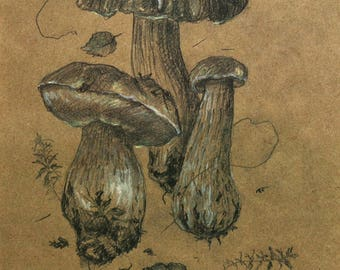 Forest Mushroom Painting, made in pencil and pastels