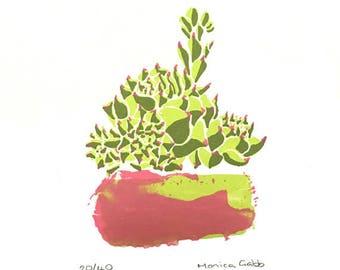 Pink Splash Succulent