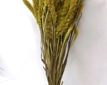 Dried Fox tail Millet/Setaria Grass Bundle/Dried Leaf/Dried floral arrangement/natural dried plant/grass bouquet