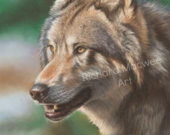 Wolf Art Print, Wildlife Art Print, Giclee Print