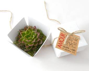La Petite Boîte Succulente Blanche et Corde Naturelle : cadeaux aux invités, mini plante grasse, mariage, baptême, anniversaire, entreprise