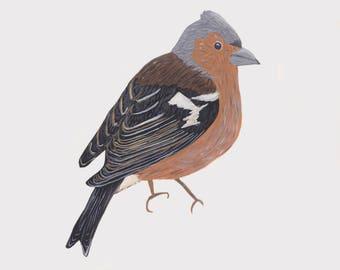 Chaffinch Bird Print