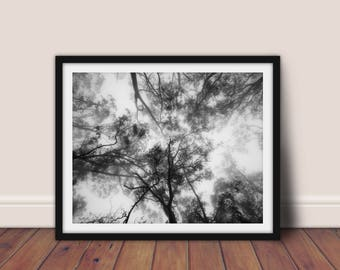 Forest Print, Black and White Print, Forest Printable Art, Forest Wall Art,Forest Photography,Nature Print,Trees Print,Tree Art,Forest Decor
