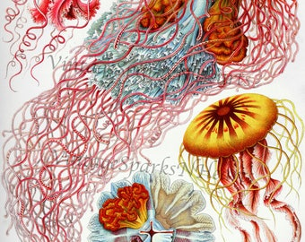 Vintage Retro Ocean Sea Life Jellyfish Art Download