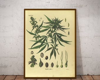 FIVE Vintage Botany Prints - Cannabis, Mustard - 1887 Medicinal Plants Encyclopedia - Printable Art - Instant Download