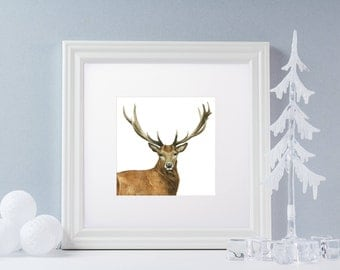 Rutland Stag Print - Limited Edition Giclee Print (includes 12x12 mount)