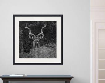 Beautiful Kudu photo wall art | fine art photography