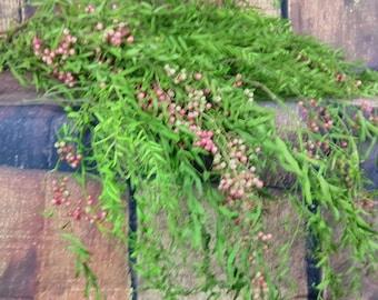 FRESH Pepper Berry, Fresh Greens, Christmas Greens, Herbs, Pepper Berry, Wedding Greens, Fresh Flowers, Christmas Decorating, Holiday Greens
