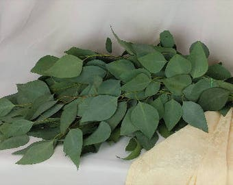 Fresh Silver Dollar Eucalyptus, Fresh Eucalyptus, Fresh Greens, Fresh Cut Flowers, Wedding Flowers, Bulk Bunch, Eucalyptus Bunch, Eucalyptus
