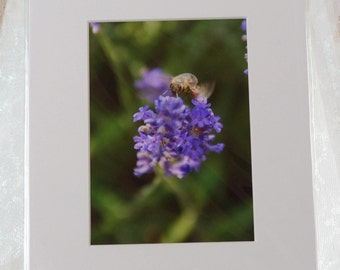 Bee on Lavender top view photo