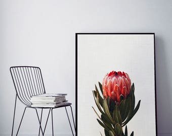 SALE 20% OFF! Protea Print, Bedroom Decor, Modern Contemporary, Large Printable Poster, Digital Download, Photography