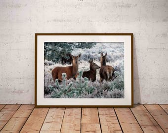 nature photography , winter photography , winter landscape ,  roe deer , winter wall art , printable wall art