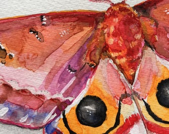 Io Moth - original watercolor painting moth portrait