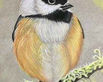 Black-Capped Chickadee Original Drawing