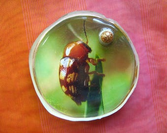 BEETLE PIN BROOCH -  2.25 Inch Large Size Pin with Photo & Golden Sphere Embedded in Clear Resin, Brown Beetles Original ooak Picture Pins