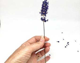 Dried Pressed Lavender Stems x10. Purple Loose Pressed Lavender. Tall Single Flowers. Loose Craft Flowers. Fragrant Dried Pressed Flowers.