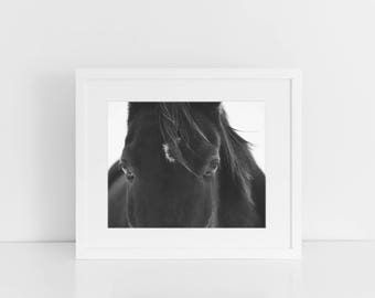 Close Up Black Horse Photograph, Black and White Animal Photography, Physical Print