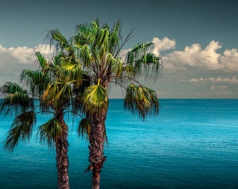 Laguna Beach Palm Trees with Blue Cloudy Sky near LA in Southern California No.83254 A Fine Art Seascape Photograph