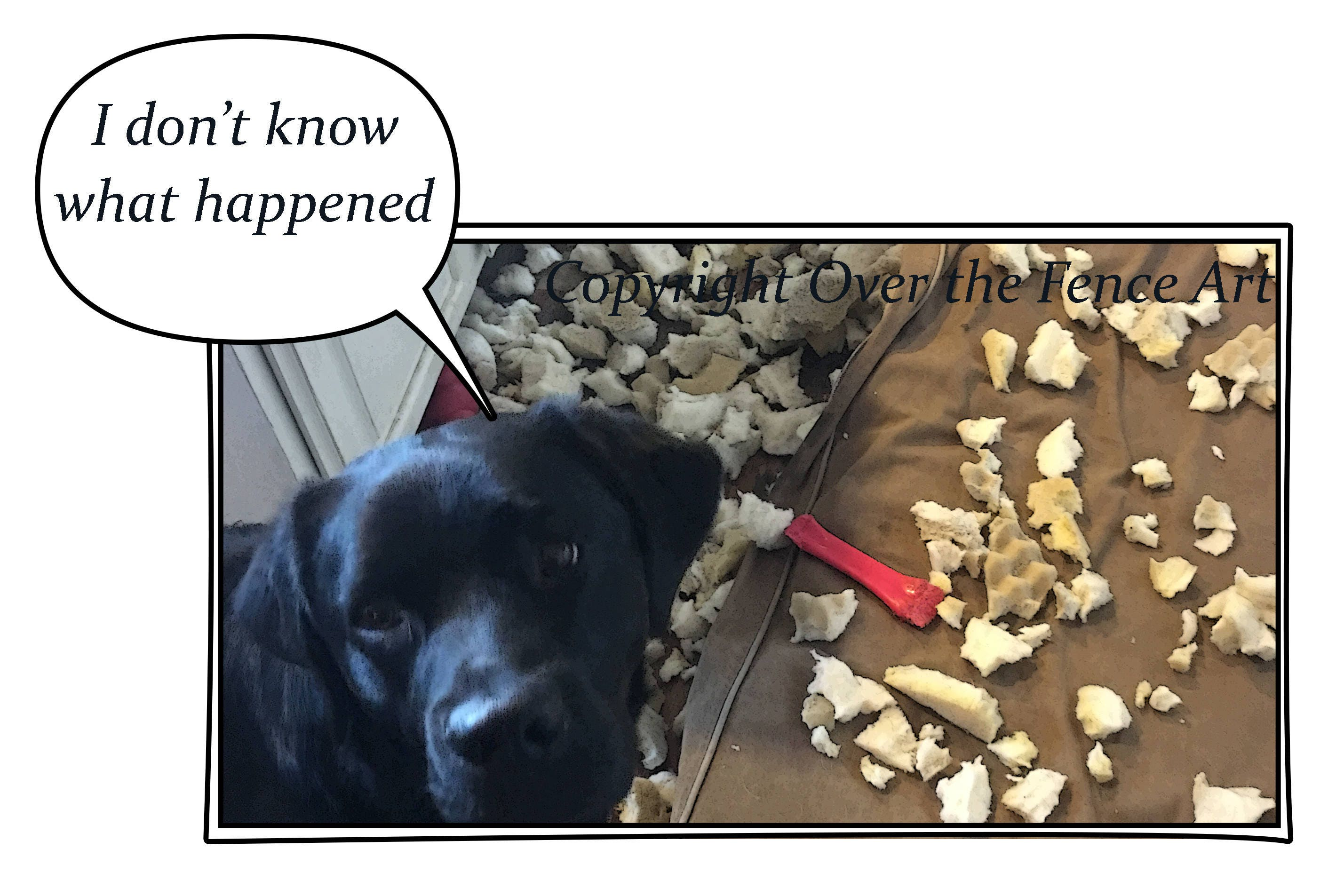 Dog Card Black Funny Labrador Puppy Destroys Dog Bed Photo