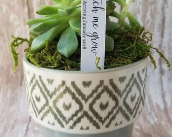 Watch me grow Succulent Stake, Succulent Stake,  Baby Shower Favor Plant Tag, Flag Tag, Plant Stake, Baby Shower, Favor, Baby Sprinkle (S12)