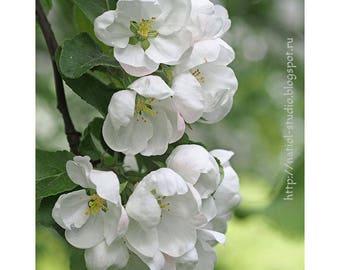 Print Flowers apple, Living Room Wall Art, Art for Home, Flower Poster, botanical Art for Office,  living room, gift to bedroom, Painting