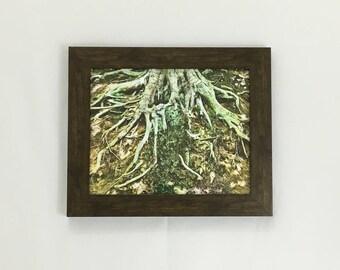 Tree Root Wall Art, Tree Art, 8x10 Print, 11x14 Print, 16x20 Print, Tree Root Print, Nature Photography, Forest Art, Housewarming Gift
