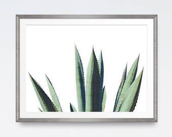 Cactus print, Aloe Vera print, Plant prints, Photography print, Leaf, Printable wall art, Cactus photography, Tropical print, Digital print