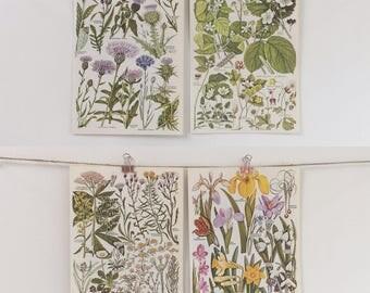 Vintage 1960's British Flora Flower Botanical Set of 4 Wall Decor Illustration Print Book Pages