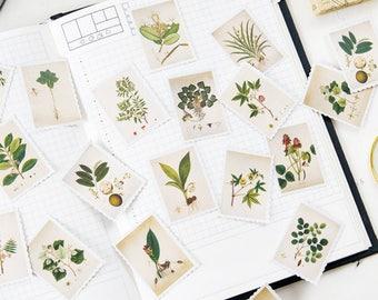 45 Pcs Plants Sticker, Botanicals Stamp Sticker Flakes, Herbs Filofax Stickers, Scrapbook, Leaves Schedule Sticker,Flower, Nature, Greenery