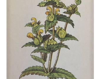 Botanical Print - Flowers of the Meadow - #8 Yellow Rattle