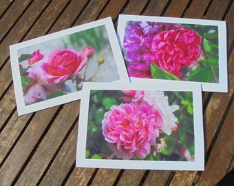 Set of three photo cards -Roses in my garden