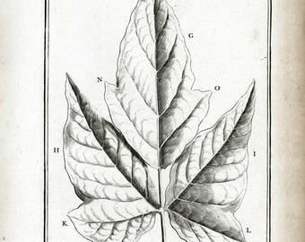 1797 Antique Fern Print Botanical Illustration Natural History Wall Art Home Decor